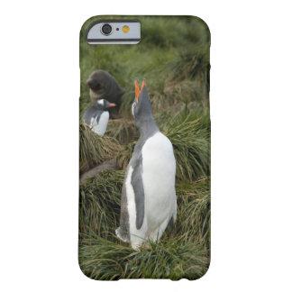 South Georgia Island, Godthul. Gentoo penguin Barely There iPhone 6 Case