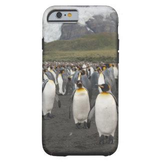 South Georgia Island, Gold Harbor. King penguin 2 iPhone 6 Case