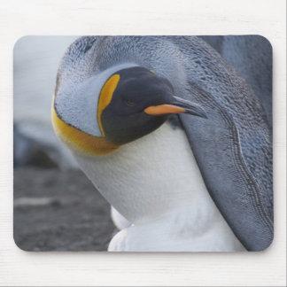 South Georgia Island, Gold Harbor. King penguin 3 Mouse Pad