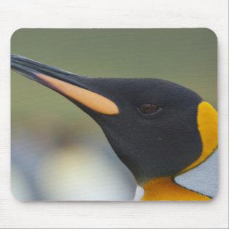 South Georgia Island, Gold Harbor. King penguin 4 Mouse Pad