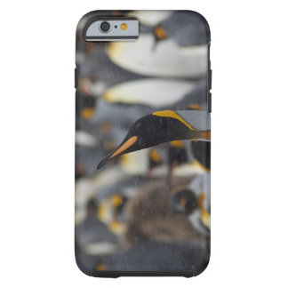 South Georgia Island, Salisbury Plain. Second Tough iPhone 6 Case