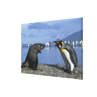 South Georgia Island, St. Andrews Bay, King Canvas Print