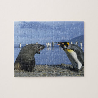 South Georgia Island, St. Andrews Bay, King Jigsaw Puzzle