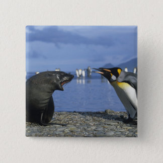 South Georgia Island, St. Andrews Bay, King Pinback Button