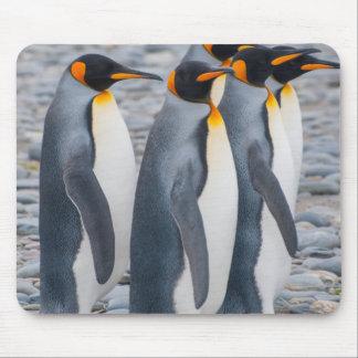 South Georgia. King penguins Mouse Pad