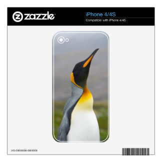 South Georgia. Saint Andrews. King penguin 2 Skins For The iPhone 4S