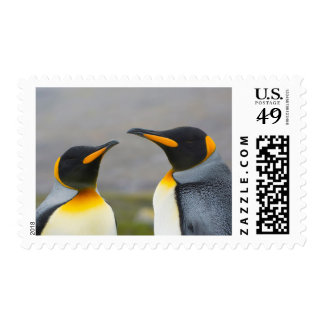 South Georgia. Saint Andrews. King penguin 3 Postage Stamp