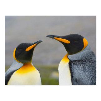 South Georgia. Saint Andrews. King penguin 3 Postcard