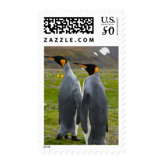 South Georgia. Saint Andrews. King penguin 4 Postage