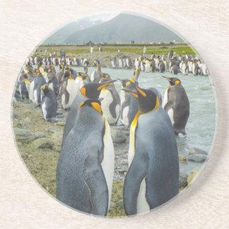 South Georgia. Saint Andrews. King penguin 6 Drink Coaster