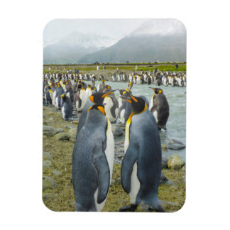 South Georgia. Saint Andrews. King penguin 6 Magnet