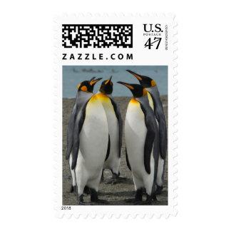 South Georgia. Saint Andrews. King penguins 8 Stamp