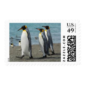 South Georgia. Saint Andrews. King penguins 9 Postage