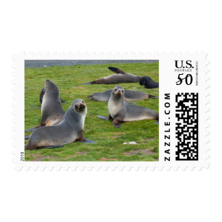 South Georgia. Salisbury Plain. Antarctic fur 1 Postage