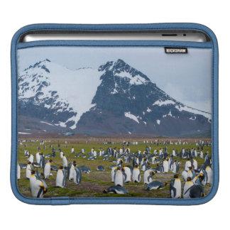 South Georgia. Salisbury Plain. King penguins 1 Sleeve For iPads