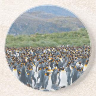 South Georgia. Salisbury Plain. King penguins 3 Coaster