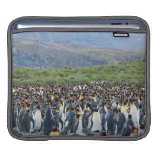 South Georgia. Salisbury Plain. King penguins 3 iPad Sleeve