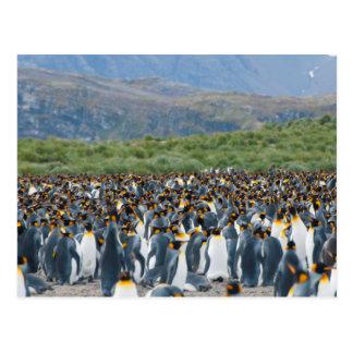 South Georgia. Salisbury Plain. King penguins 3 Postcard