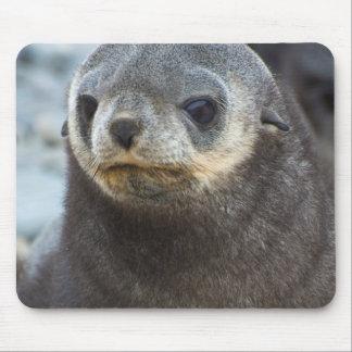 South Georgia. Stromness. Antarctic fur seal 3 Mouse Pad