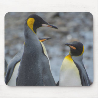 South Georgia. Very tall King penguin Mouse Pad