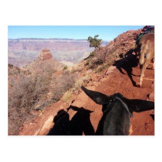 South Kiabab Grand Canyon National Park Mule Ride Postcard