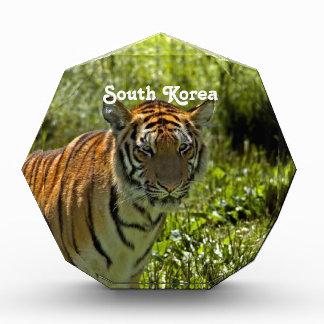 South Korean Tiger Acrylic Award