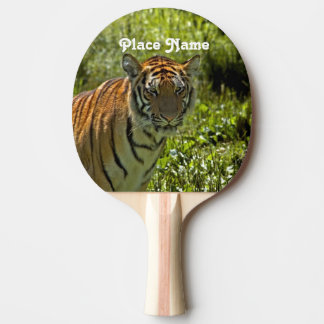 South Korean Tiger Ping-Pong Paddle