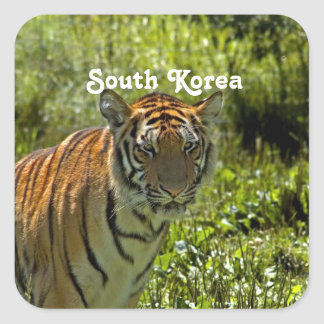 South Korean Tiger Square Stickers