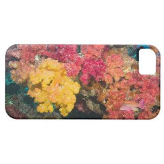 South Pacific, Fiji, filón del arco iris en iPhone 5 Case-Mate Coberturas