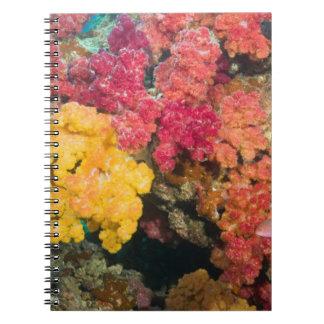 South Pacific, Fiji, filón del arco iris en Taveun Cuaderno