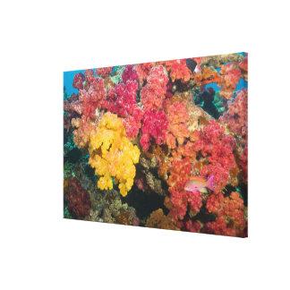 South Pacific, Fiji, Rainbow Reef in Taveuni Canvas Print