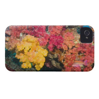 South Pacific, Fiji, Rainbow Reef in Taveuni iPhone 4 Case-Mate Case