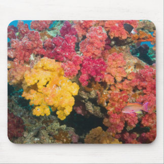South Pacific, Fiji, Rainbow Reef in Taveuni Mouse Pad