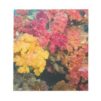South Pacific, Fiji, Rainbow Reef in Taveuni Notepad