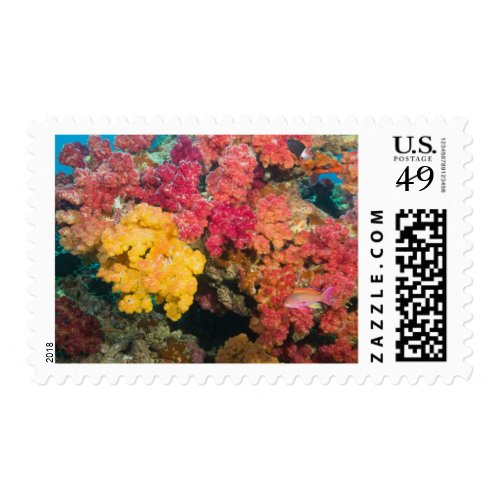 South Pacific, Fiji, Rainbow Reef in Taveuni Postage