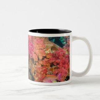 South Pacific, Fiji, Rainbow Reef in Taveuni Two-Tone Coffee Mug