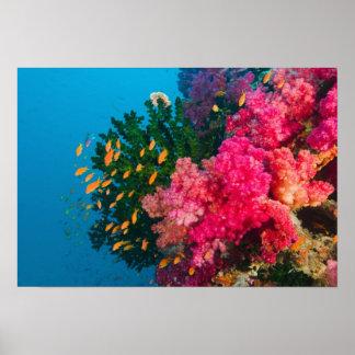 South Pacific, Fiji, Viti Levu, Bligh Water, Print