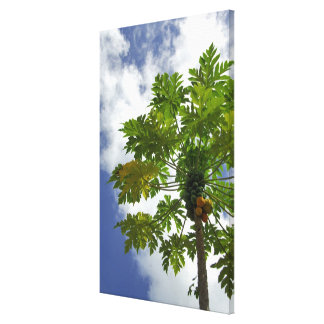 South Pacific, French Polynesia, Moorea. 2 Canvas Print