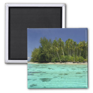 South Pacific, French Polynesia, Moorea 2 Magnet