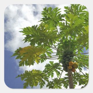 South Pacific, French Polynesia, Moorea. 2 Square Sticker