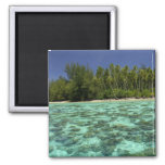 South Pacific, French Polynesia, Moorea 3 2 Inch Square Magnet