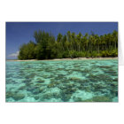 South Pacific, French Polynesia, Moorea 3 Card