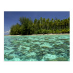 South Pacific, French Polynesia, Moorea 3 Postcard