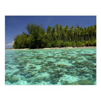 South Pacific, French Polynesia, Moorea 3 Postcard