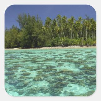 South Pacific, French Polynesia, Moorea 3 Square Sticker