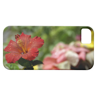 South Pacific, French Polynesia, Society 2 iPhone SE/5/5s Case