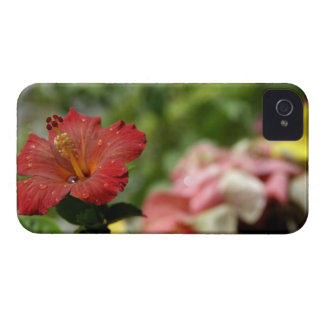 South Pacific, Polinesia francesa, sociedad 2 Case-Mate iPhone 4 Protector