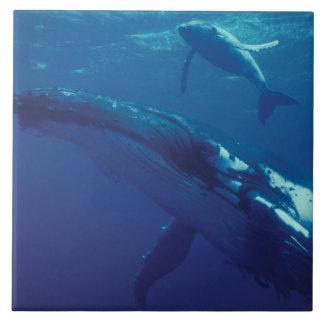 South Pacific, Tonga. ballena jorobada y becerro Azulejo Cuadrado Grande