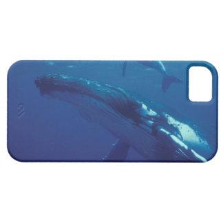 South Pacific, Tonga. ballena jorobada y becerro iPhone 5 Case-Mate Funda