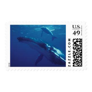 South Pacific, Tonga. ballena jorobada y becerro Franqueo